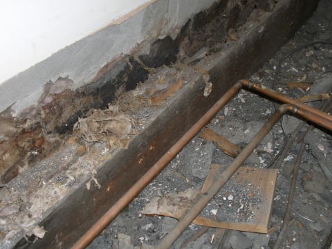 Dry rot treatment Cardiff